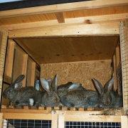 Клетки для кролей по методу Михайлова: чертежи и фото