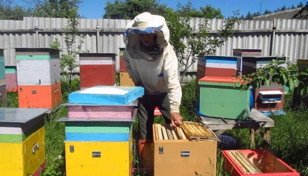 Блог о пчеловодстве - самая полезная информация для начинающих - Страница 9 из 11