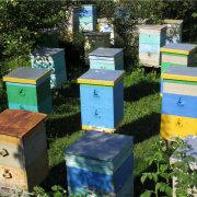 Обзор австралийского улья, который сам собирает мед