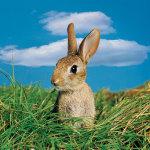 Заяц на фоне травы и неба