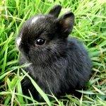 Карликовый крольчонок впервые на прогулке