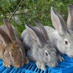 Три кролика на ящике