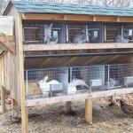 Многоярусный уличный домик для кролей