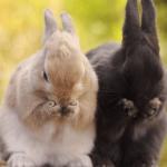 Больные кролики трут мордочки