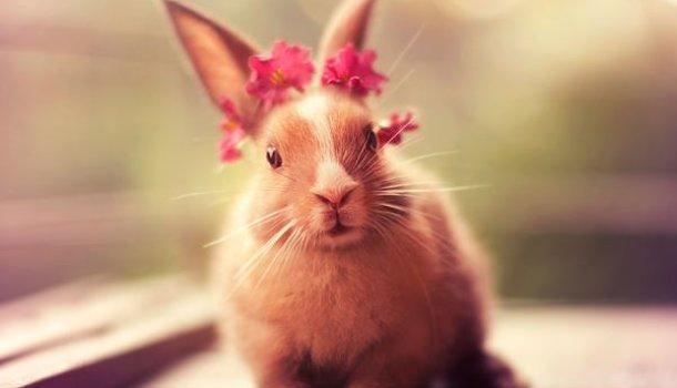Чем кормить декоративного кролика в домашних условиях 69