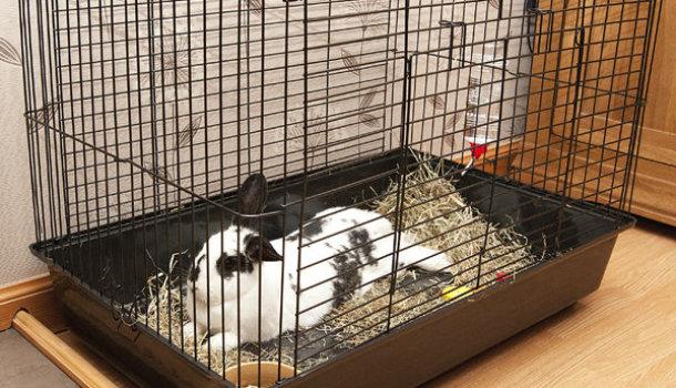 Как сделать клетку для домашнего кролика 177