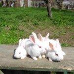 Крольчиха с детками на солнце