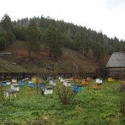 Пасека на колесах: особенности и организация кочевого пчеловодства