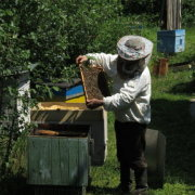 Пчеловодство Урала: особенности, обзор и видео