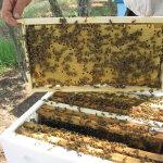 Обработанные пчелиные рамки