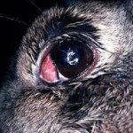 Поврежденный глаз болезнью