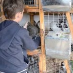 Мальчик возле кроликов в шедах