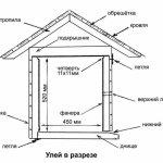 Схема-изображения улика в разрезе