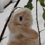Кроль обгрызает листья шиповника