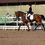 Выездка на тракененской лошади