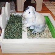 Шлейка для кролика: как сделать и надеть