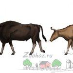 Соотношение размера человека и тура