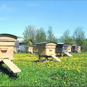Пчеловодство в кемеровской области: обзор и видео