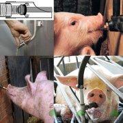 Как построить мини ферму для свиней: чертежи и видео