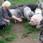 Вьетнамские свинки с хозяйкой