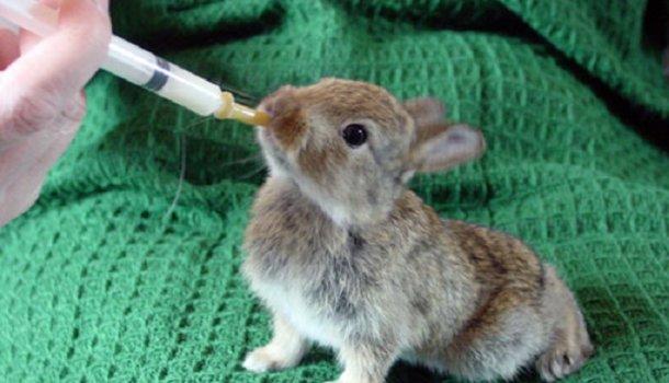 Как и чем кормить кроликов в домашних условиях, чтобы они набирали вес и не болели: советы с фото и видео - Страница 2 из 2