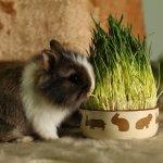 Карликовый кролик ест траву