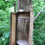Вертикальная дуплянка в лесу