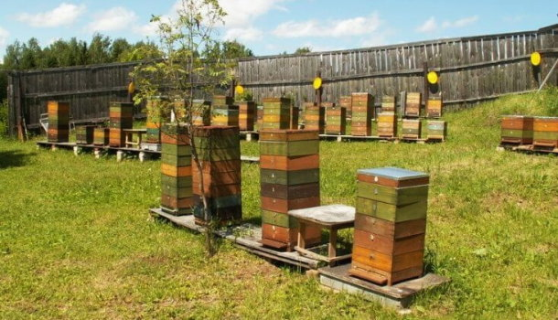 Блог о пчеловодстве - самая полезная информация для начинающих - Страница 3 из 11