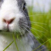 Защита кроликов от комаров: советы и видео обзор