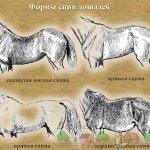 Разные формы спины лошадей
