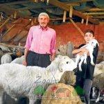 Семейство фермеров в кирпичной овчарне