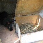 Крольчиха породы среднего размера возле кубла