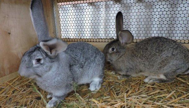 Блог о кроликах - самое интересное и полезное для начинающих - Страница 7 из 10