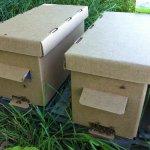 Пакет для пчел из картона