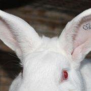 Почему дохнут кролики: причины и методы решения