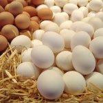 Белые и коричневые яйца на соломе
