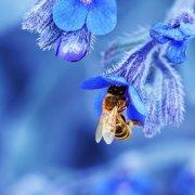 Как сделать отводок для пчел весной: описание и видео