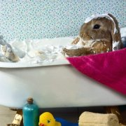Почему декоративные кролики кусаются и как их отучить: советы с видео