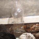 Цыплята пьют воду из бутылки
