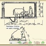 Размеры стойла для взрослой коровы