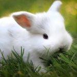Белый крольчонок в зеленой травке