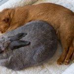 Неразлучные друзья спят
