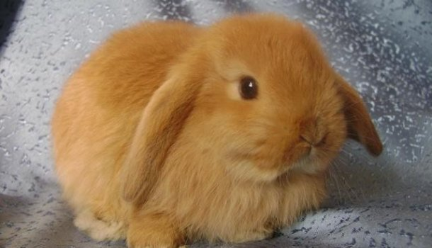 Как сделать клетку для домашнего кролика 193