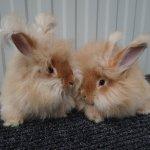 Два малыша коричневого цвета