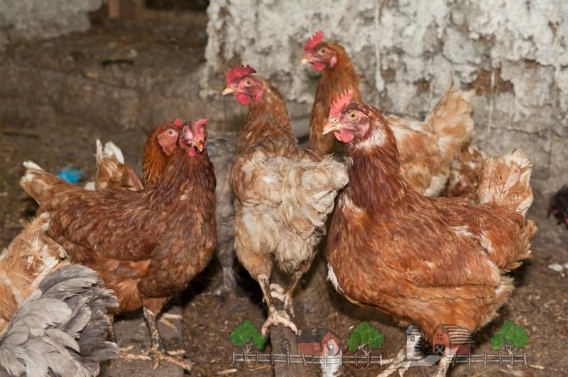 Как избавиться от глистов навсегда?: Болезни и лечение птиц
