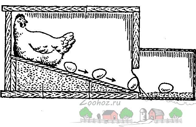 Схема гнезда с яйцесборником