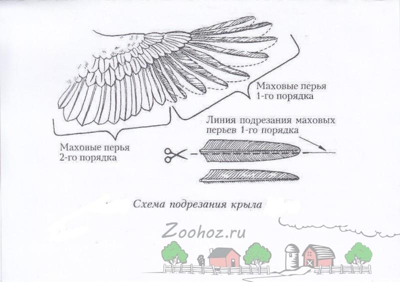 Схема обрезки крыла фото