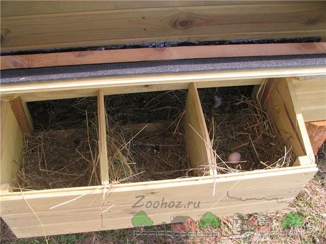 Яйца в самодельном гнезде фото