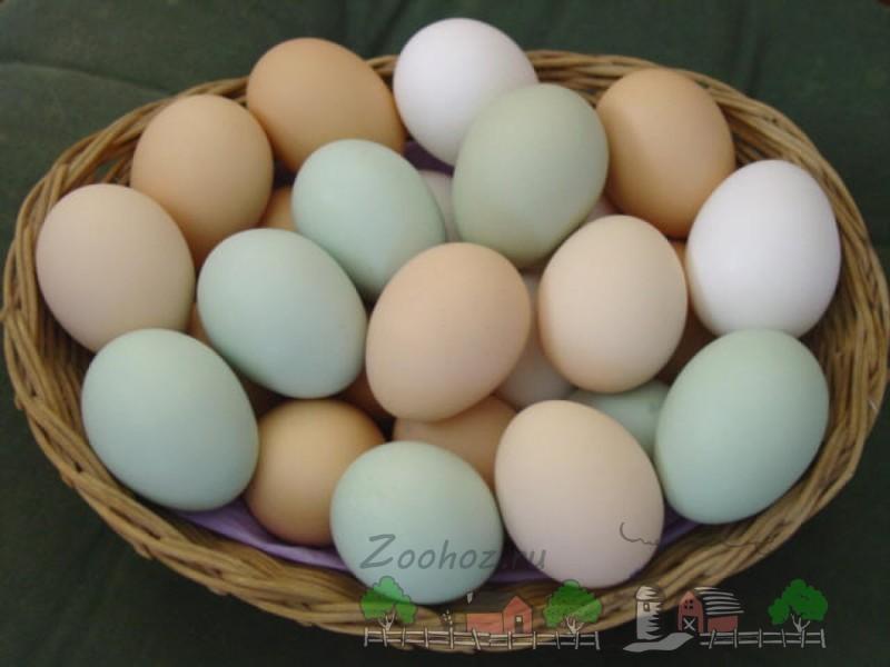 Яйца в корзине фото