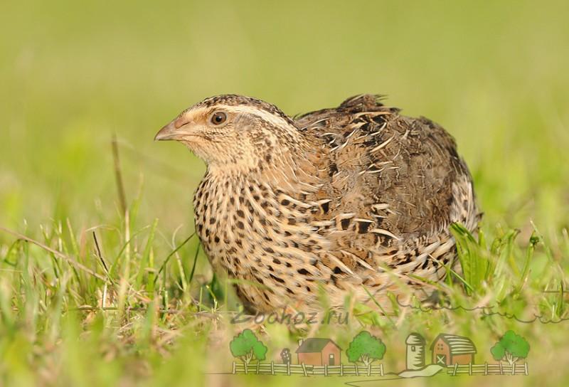 Фото птицы в траве